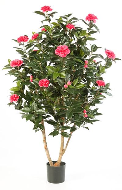 Camellia japonica nuccio 39 s gem cultivar de camelia - Camelia planta ...